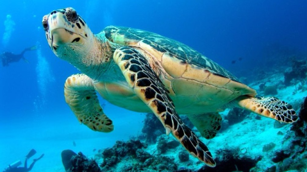 Explore Zante beaches - our famous turtles